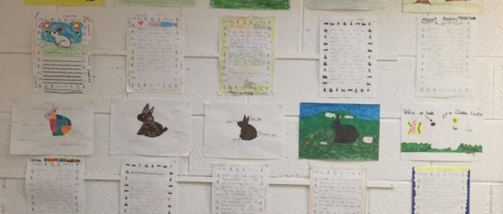 Táimid ag foghlaim faoin seanra 'tuairsc'. Seo ár reports bearla about Rabbits.