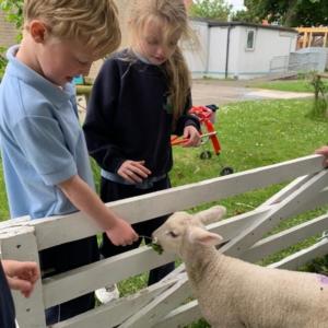 Wooly Farm le Naíonáin Mhóra
