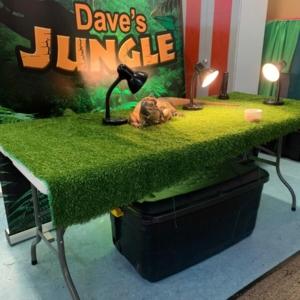 Dave's Jungle le Naíonáin Mhóra